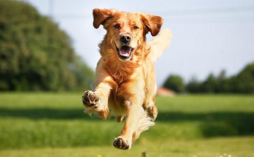 Какую собаку лучше всего завести дома?