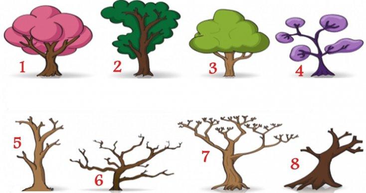 Тест: Выбери дерево, чтобы узнать скрытые черты характера
